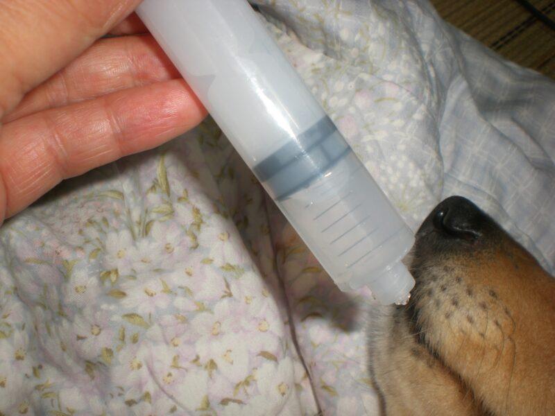 犬の緩和治療は大変