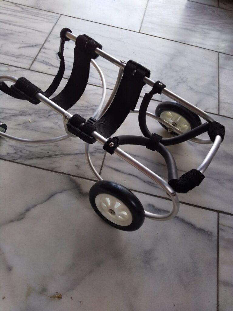 犬の車椅子は、ピッタリな物を